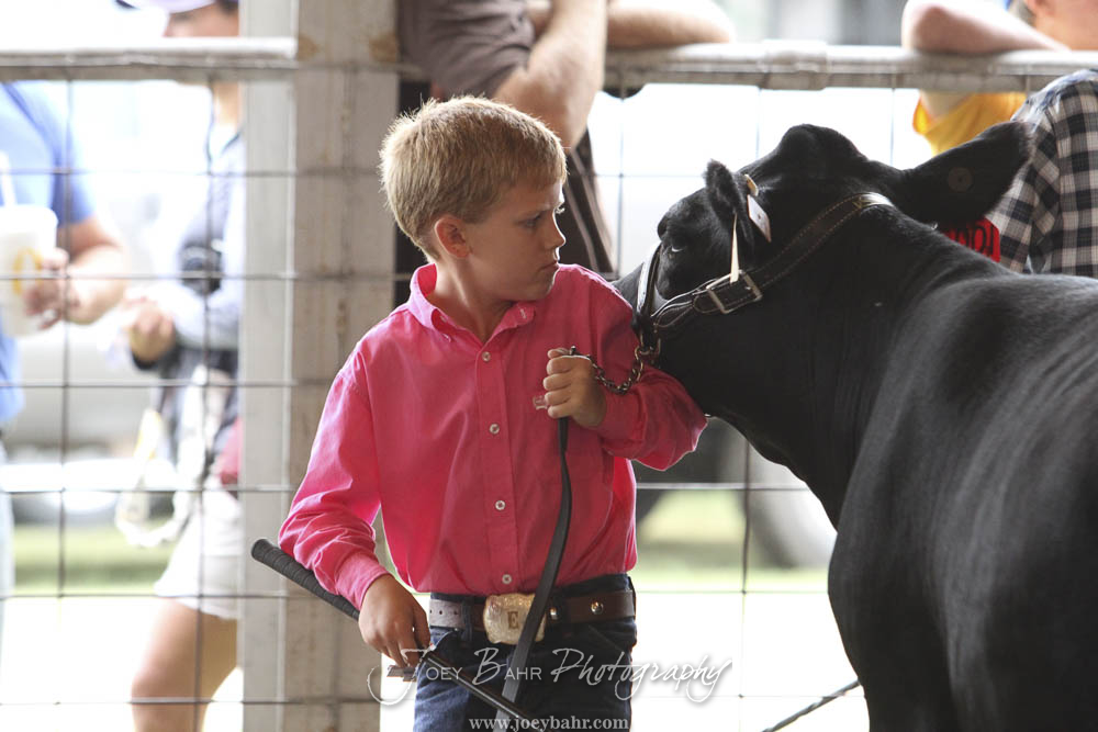 Competitors show their projects during the 2016 Rush County Fair Beef Show and Showmanship Round Robin at Rush County Fair Grounds in LaCrosse, Kansas on August 6, 2016. (Photo: Joey Bahr, www.joeybahr.com)